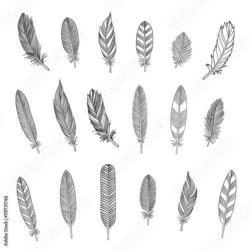 Fotografie, Tablou Rustic Feathers