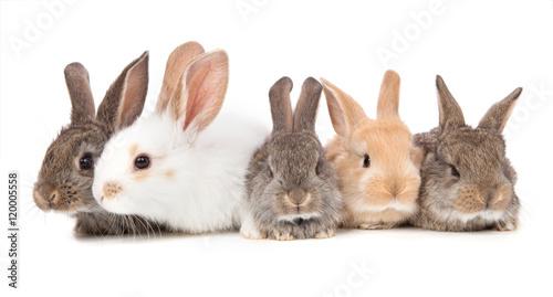 Fotografia five little cute rabbit on a white background