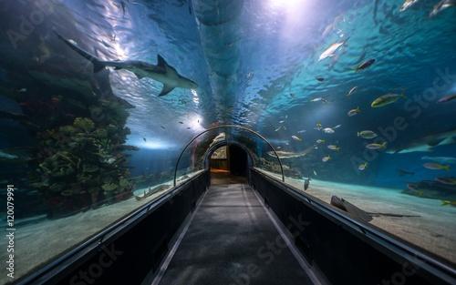 Fotografija Hallway at large aquarium