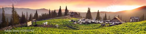 Slika na platnu Shepherds and sheep Carpathians