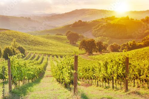 Canvas Print Beautiful vineyard among Hills on sunset