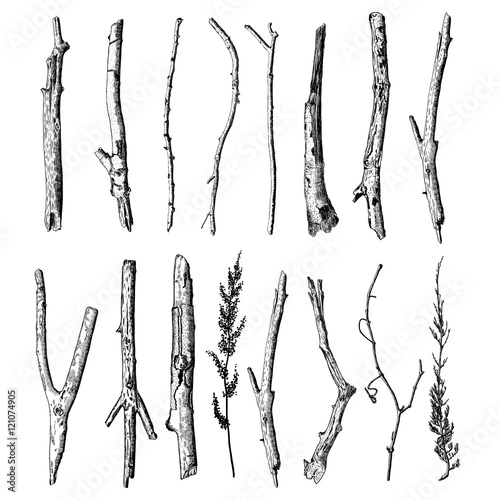 Wallpaper Mural Set of detailed and precise ink drawing of wood twigs, forest collection, natural tree branches, sticks, hand drawn driftwoods forest pickups bundle