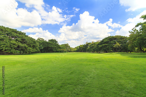 Canvas Print Green trees in beautiful park