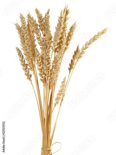 Valokuva Weizen - Ähre