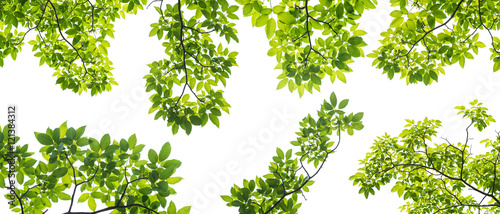 Fotografia set of branch with leaves isolated on white background