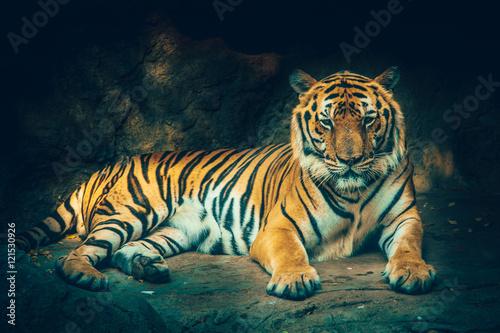 Naklejka na szafę Tygrys z kamiennym górskim tłem