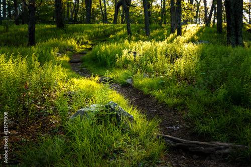 Photographie Appalachian Trail, Shenandoah National Park