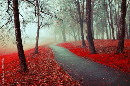 Misty autumn view of autumn park alley in heavy fog - foggy autumn landscape with bare autumn trees and red fallen leaves
