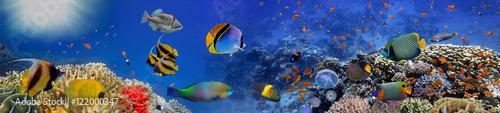 Fotografija Sea corals. Panorama