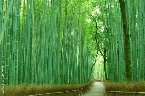 Fototapeta premium Las bambusowy w Kioto