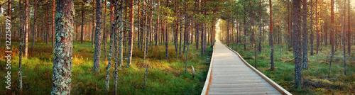Fotografie, Obraz Viru bogs at Lahemaa national park in autumn