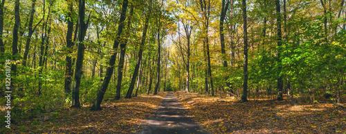 Fototapeta Ścieżka przez jesienny las na wymiar