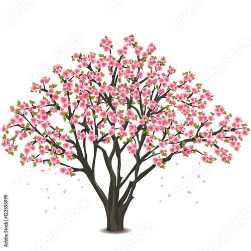 Slika na platnu Japanese cherry tree blossom over white