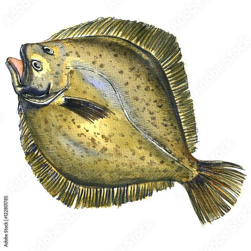 Valokuvatapetti Whole fresh raw plaice fish, flatfish, flounder, isolated, watercolor illustrati