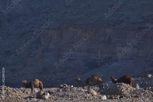 Shepherds of Jordan Fototapet