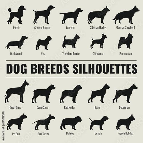 Fényképezés Dog breeds vector silhouettes set