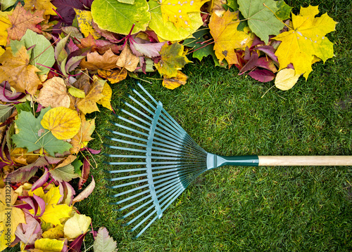 Obraz na płótnie Rake on a wooden stick and Colored  autumn foliage