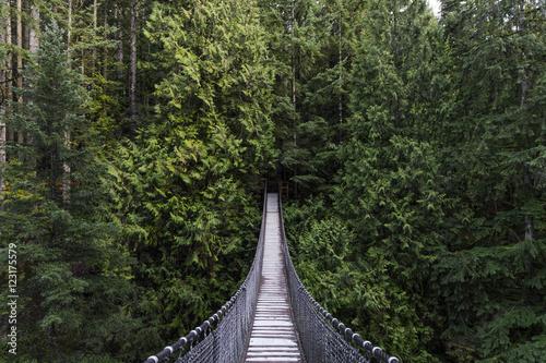 Fototapeta premium Most wiszący w lesie. Zimozielony. Natura Vancouver. Północno-zachodni Pacyfik. Natura. Krajobraz Vancouver.