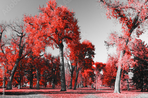 Red Trees Forest in Black and White Landscape in City Park