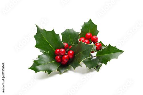 Stampa su Tela Christmas Holly