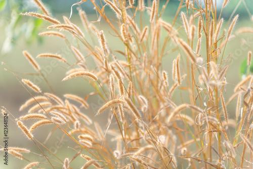 Flowers grass blurred bokeh background