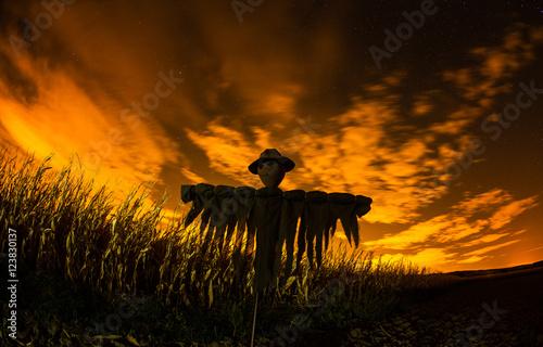 Scarecrow in the cornfield Fototapeta