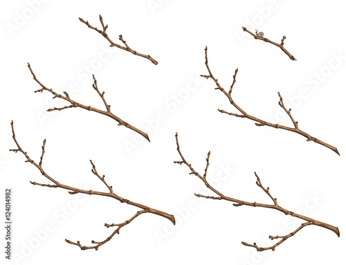 Photo tree branches