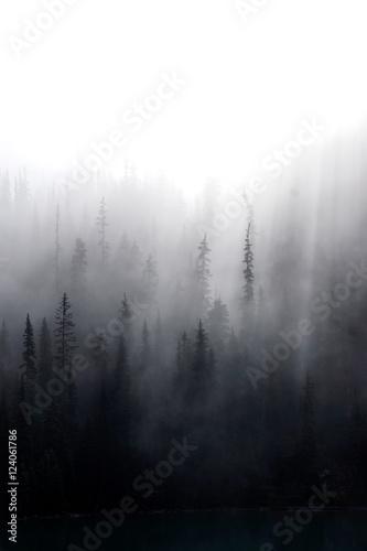 Fototapeta Las iglasty w zamglonych górach do salonu