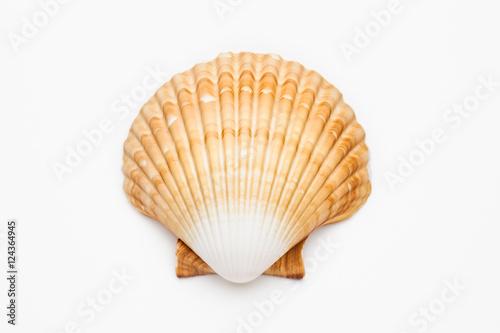 Billede på lærred shell