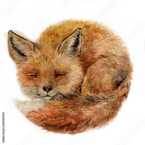 Watercolor cute sleepy fox isolated on white. Dreamy animal