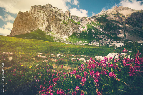 Rocky Mountains and green alpine valley with pink flowers Landscape Summer Travel scenic view