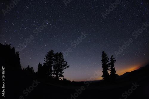 trees dusk n stars