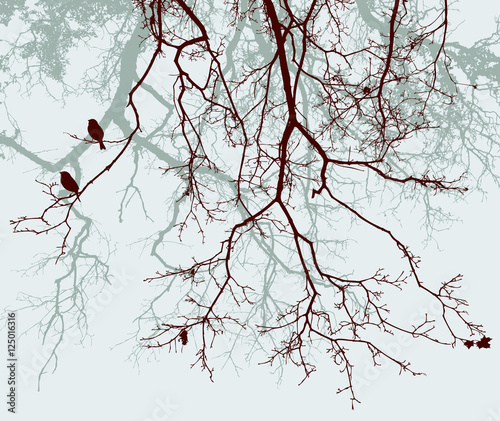 Fotografia branches of the trees in the fall