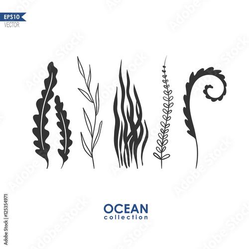 Fototapeta sea plants and seaweed isolated on white, vector oceanic plants
