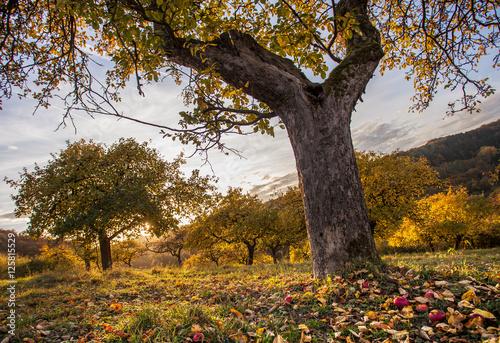 Herbst Streuobstwiese  Landschaft