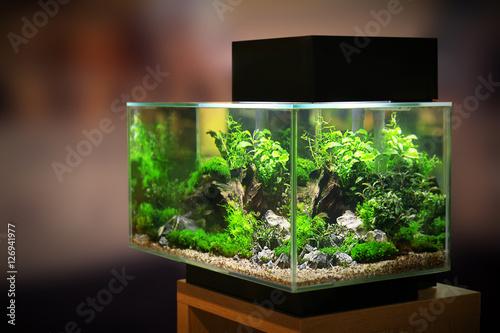Leinwand Poster Pet shop aquarium