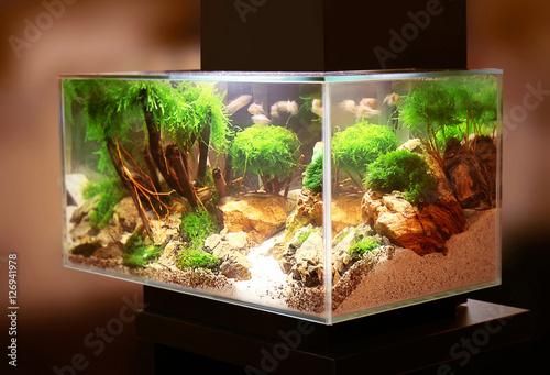 Pet shop aquarium Fototapeta