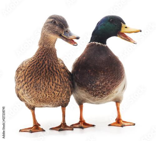 Billede på lærred Wild ducks.