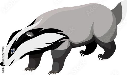 Obraz na płótnie vector European badger