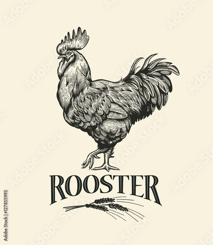 Canvastavla Illustration of the cock in Vintage engraving style