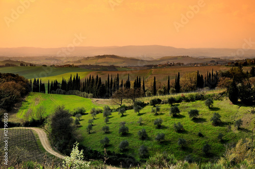 Obraz na płótnie Olive groves in Chianti in a beautiful day in autumn, Tuscany Italy