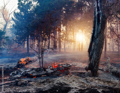 Valokuva Forest fire. Using firebreak for stoping wildfire.