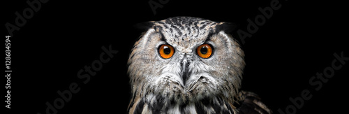 Fototapeta premium Portret pięknej sowy. Sowa na czarnym tle