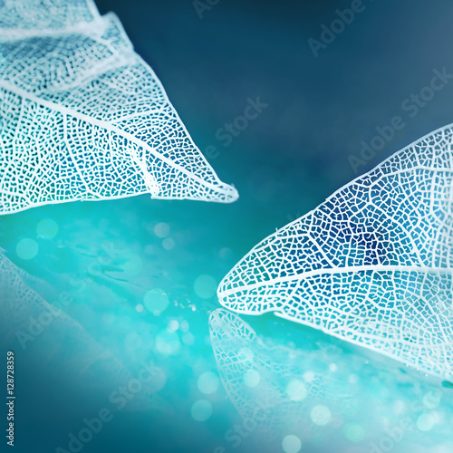 White transparent skeleton leaves with beautiful texture on a blue abstract background blurred with round bokeh water drops close-up macro. Romantic gentle artistic image.