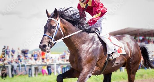 Vászonkép racing horse portrait in action