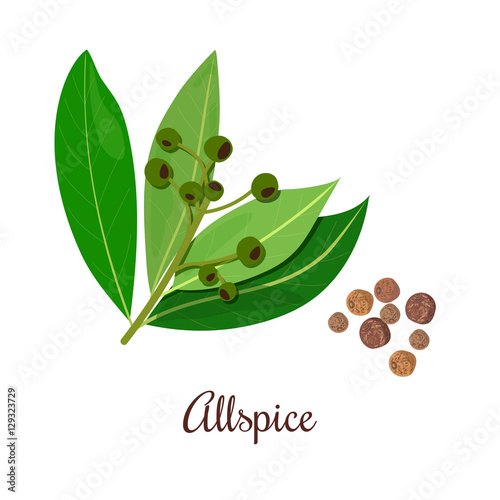 Fotografia Blossoming Allspice with seeds.