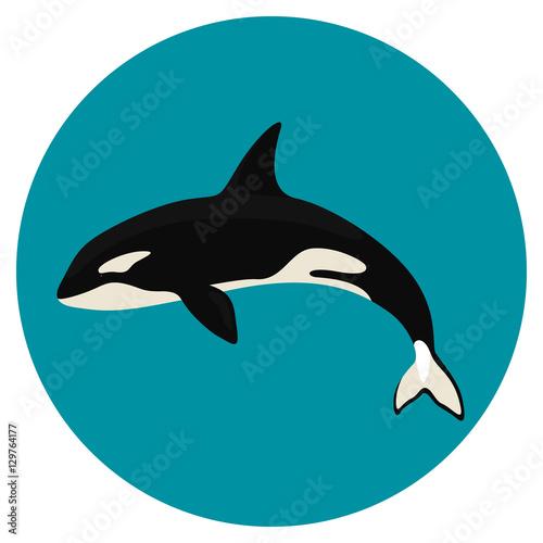 Fototapeta premium orca