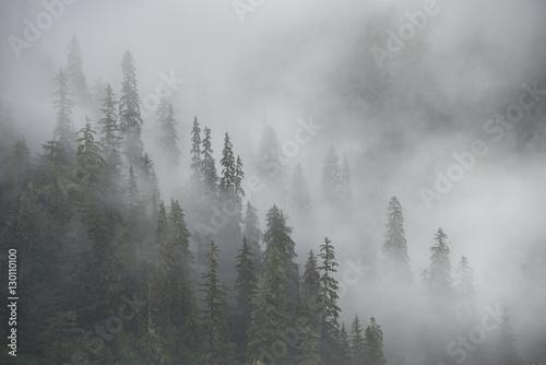 Photo Misty Rainforest, Stikine River, Alaska