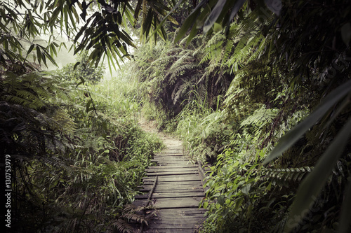 Canvas Print Path in the jungle. Sinharaja rainforest in Sri Lanka.