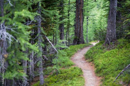Fotografie, Obraz Numa Creek Trail
